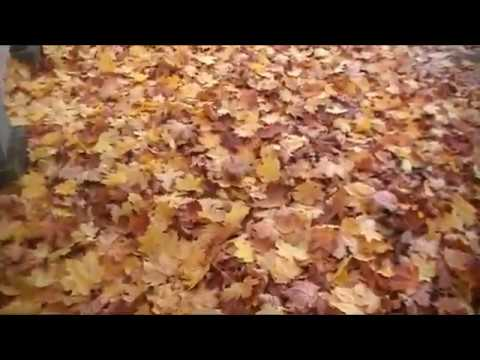 на ковре из желтых листьев клип