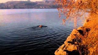 nage du 22 février 2012