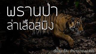 เรื่องลี้ลับ EP4 พรานป่าล่าเสือสมิง (เรื่องเล่าจากป่า)