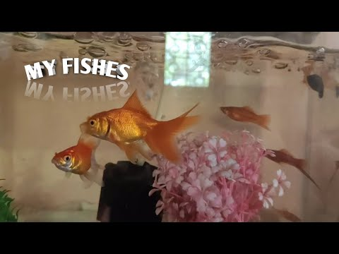 My Fishes🐠🐋🐟   Full Details About My Fishes   MKK TECH