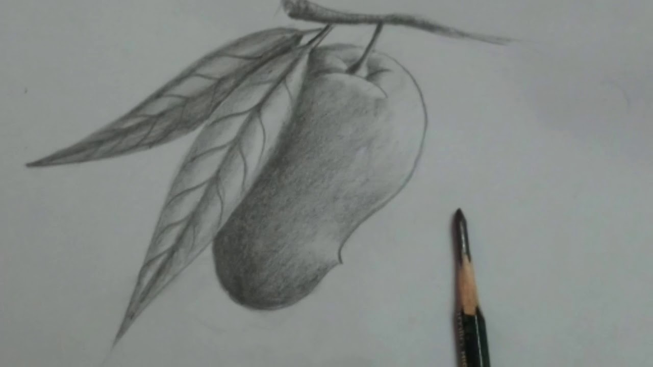 How to draw a mango pencil shading drawing