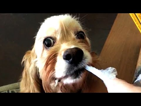 Cute and Funny Dog Videos to Make You Do a Laugh! 😂