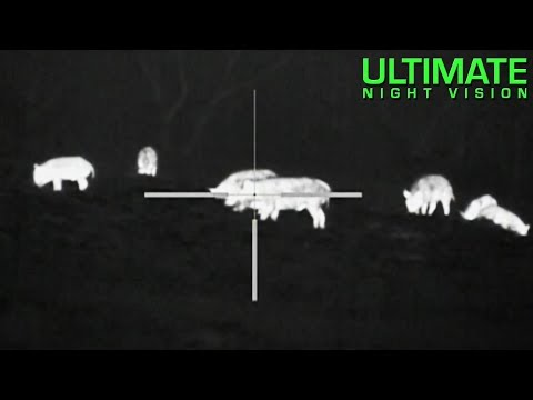 40 Hogs Down with the Pulsar Apex XQ38 Thermal Scope