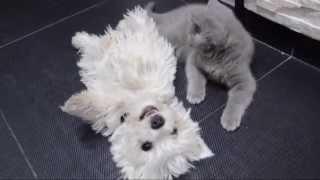 Mój Przyjaciel Rusty  - West Highland White Terrier