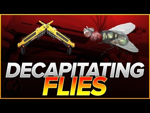 Decapitating Flies + Q&A Details | Bug-A-Salt in Slow Motion