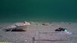 Water Wolf: Plattfischangeln in Dänemark, Gjerrild 28.06.18 - VivaVideo