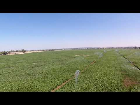 Bakersfield Farmland 3 July 2017