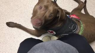 Service Dog Alerts to Anxiety