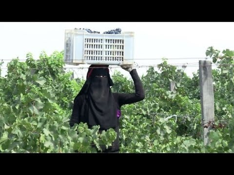 Egypt wineries struggle to revive derided industry