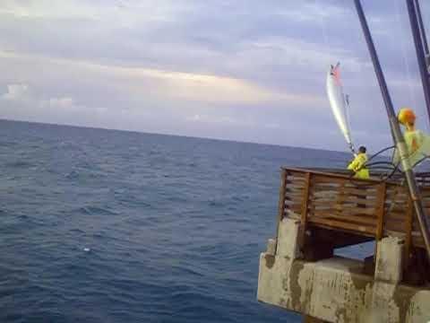 2009 10 02 juno beach pier fishing elias rocky terry chris for Juno pier fishing report