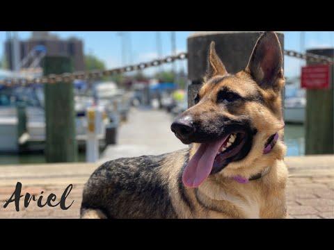 """ariel""-owner-testimonial-|-amazing-obedience-|-incredible-transformation"