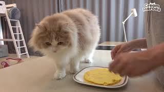 mèo dễ thương