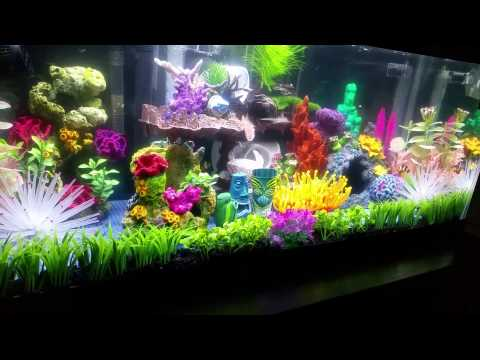 Image Gallery nemo aquarium kits