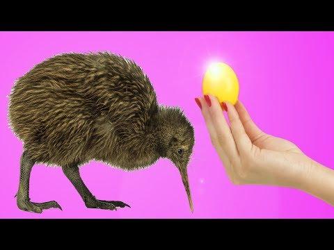 12-suprising-kiwi-life-hacks!
