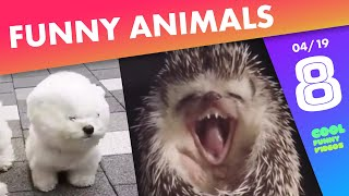 Funny Animals Compilation of the week 🐶😻 - April 2019, #8 | ...