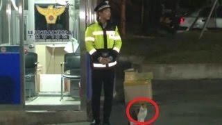 """ある日、交番に助けを求めてきた野良猫。いつの間にか """"猫のお巡りさん"""" になる!【心温まる話】 thumbnail"""