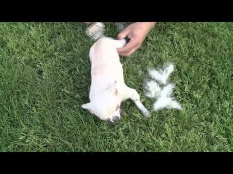 Furminator de Lujo para perros
