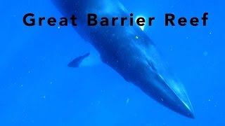 Great Barrier Reef - diving the Ribbon and Osprey reefs with Spirit of Freedom