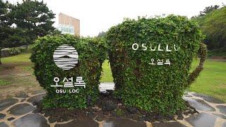 [4K] Jeju Island O'sulloc Tea …
