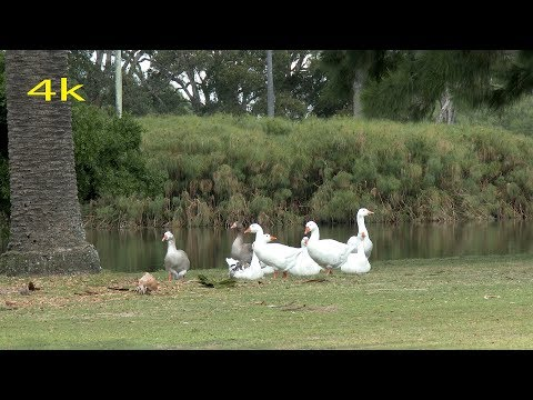 Centennial Parklands Sydney Australia