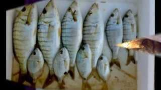 ερασιτεχνικο ψαρεμα απο κομοτηναιουςN1 φαναρι