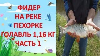 Фидерная рыбалка на р. Пехорке / Часть 1