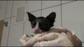 Котейка моем дустовым мылом (блохи вши)