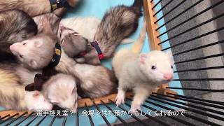 2017 5.14 ららぽーとTOKYO-BAYで行われた、 フェレットチューブレース...