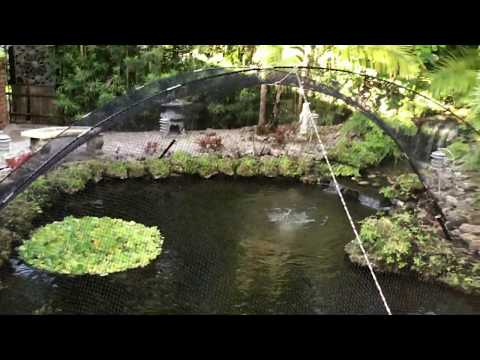 How To Install A Pond Net To Keep Out Animals - Easy, Fast And Looks Great