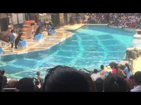 dolphins performances in thailand