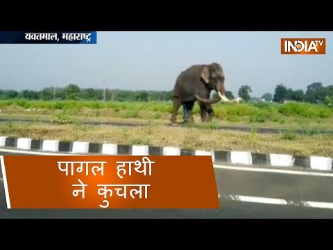 Angry elephant crushes woman to death in Maharashtra