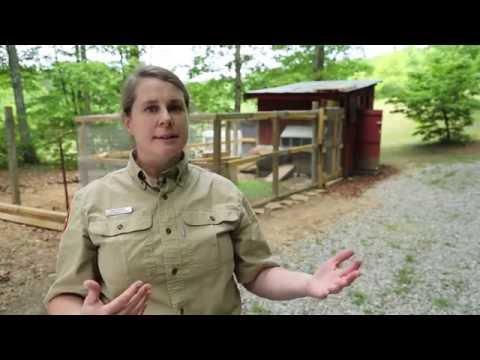WildCast Xtra: Predator Proofing Your Chicken Coop