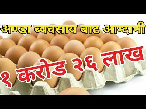 १ कराेड २६ लाख अाम्दानी अण्डा ब्यवसायबाट - Egg poultry business in Nepal