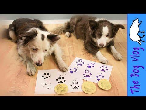 Paw Print Stamp Of YOUR Dog - DIY