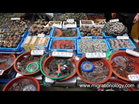 Fresh Seafood at Noryangjin Fish Market in Seoul, South Korea