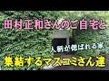 惜別!田村正和さんのトトロ的ご自宅と、集結するマスコミさん達