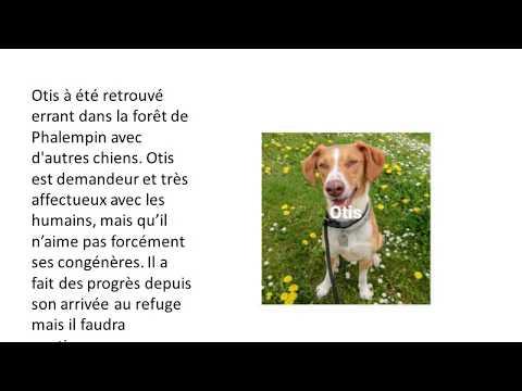 Animaux A Adopter Sur Le Site Du  Refuge De Roubaix