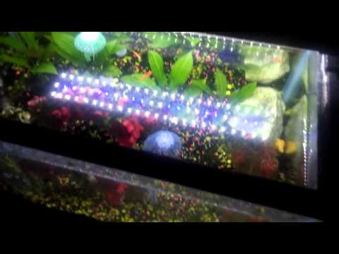 this video by youtuber sin city cichlids shows the mingdak in action for both the white light and blue glow light settings