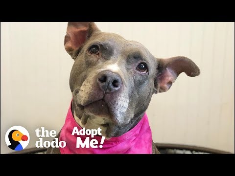 Let's Help This Pittie Find A Home After 7 Years In The Shelter | The Dodo Adopt Me!