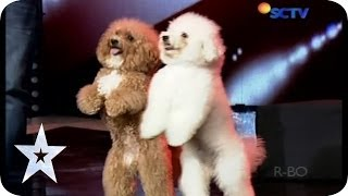 Such a Lovely Dog Acrobatic - Lovly Dog - AUDITION 5 - Indonesia's Got Talent