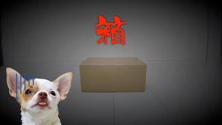 家に届いた謎の箱を開たら愛犬の様子がおかしくなりました【DoggyBox8月号開封】