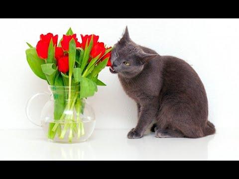 Кошка ест цветы.Смех да и только.Приколы про кошек.