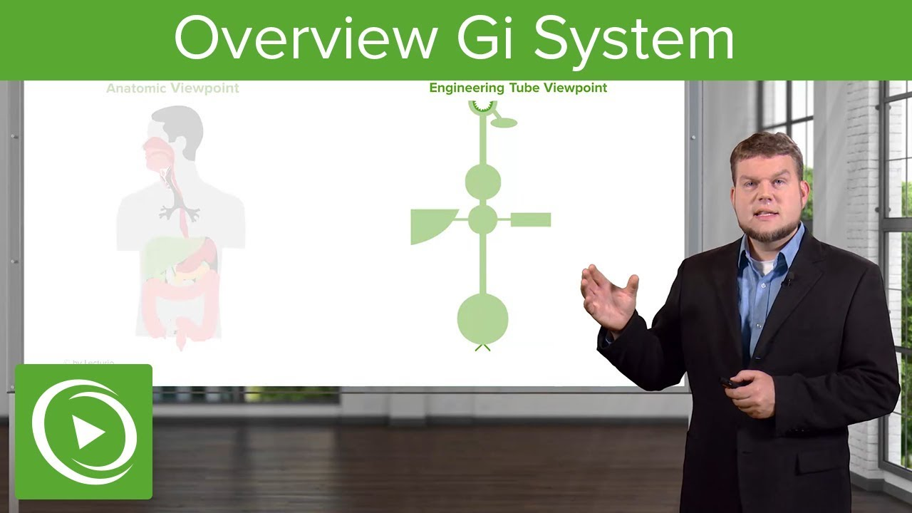 Overview: Gastrointestinal System – Physiology   Lecturio
