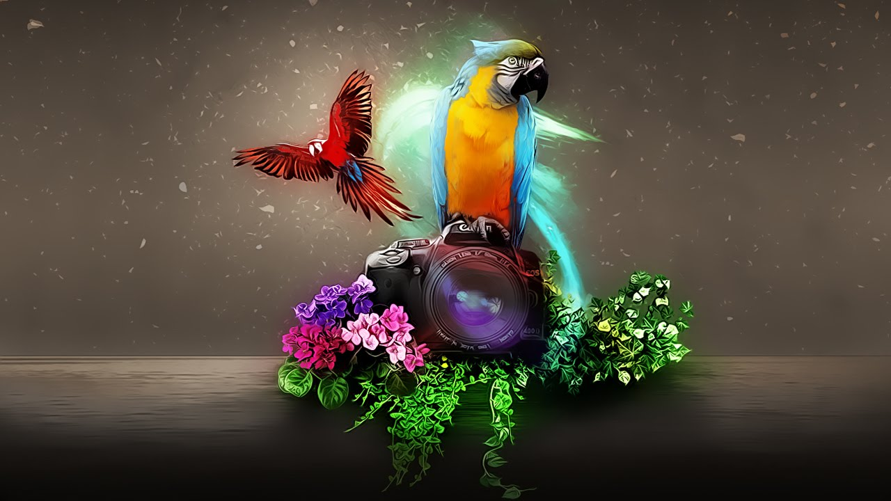 3d Wallpapers For Windows 8 Hd Free Download Digital Art Photoshop Tutorial Two Macaw Youtube