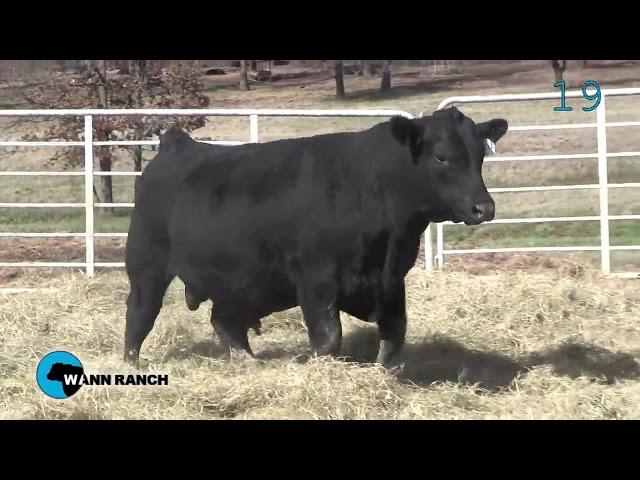 Wann Ranch Lot 19