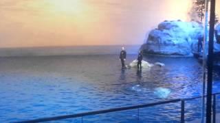 Dolphin show at Shedd Aquarium Chicago Illinois