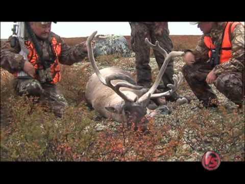 Escape to the Wild  Quebec Caribou