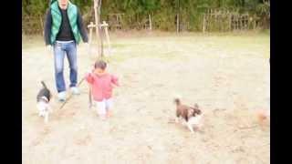 1歳3カ月の花蓮ちゃん2歳3カ月の柚咲ちゃんがビーグルりりぃさんとチワ...