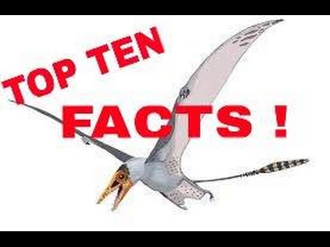 ULTIMATE TOP 10 PTEROSAUR FACTS !!!
