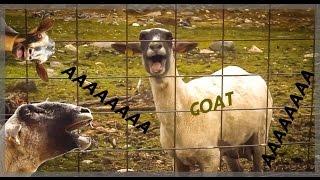 Goat Scream Remix [Remix kozy]